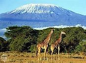 Kilimanjaro Climb summiting Co.Ltd Moshi
