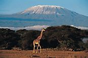 Backpackers travel tips and African safaris Ltd Arusha
