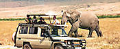 Travel African Safaris Ltd Moshi