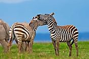 Tanzania Tour and Safaris Ltd Nairobi
