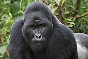 Bwindi Gorilla Expeditions Kampala