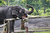 Mysore Coorg  1 Nights 2 Days Mysore